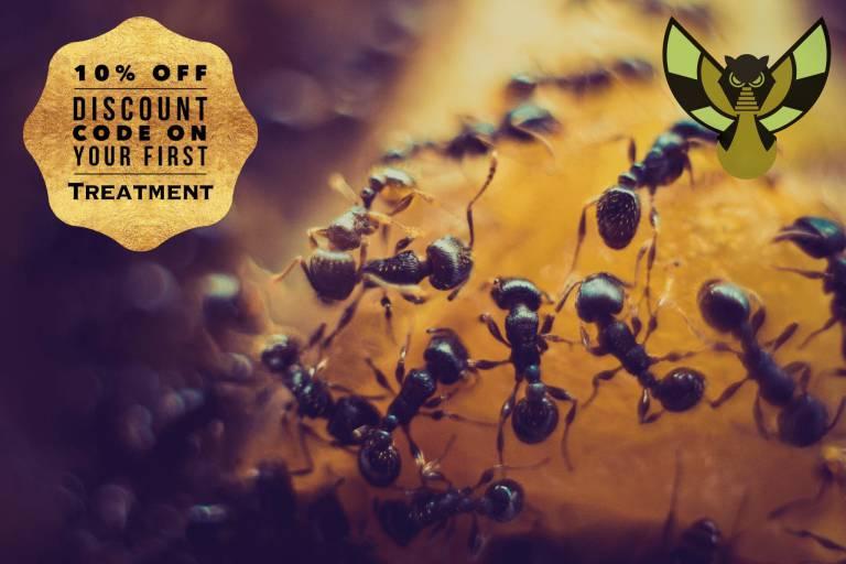 Ant-Discount-768x512-1.jpg