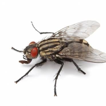 Clusterflylarge-370x370-1.jpg